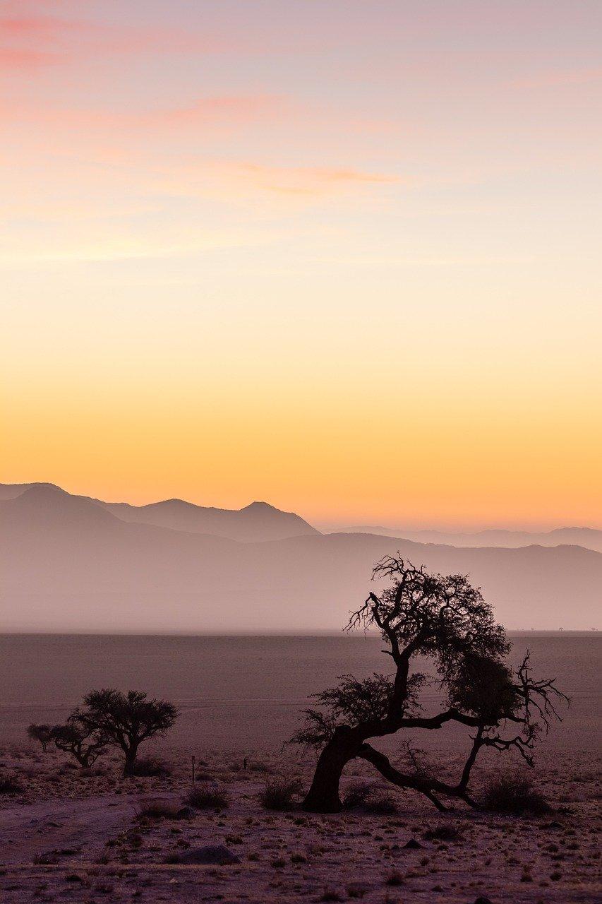 namibia, africa, desert