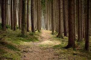 forestry, nature conservation, forest-679173.jpg
